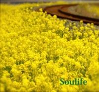Soulife Beautiful Life