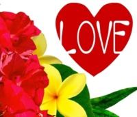 WAYNE WONDER LOVE AND AFFECTION