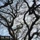 Custom Blue EP3 'The Tree'