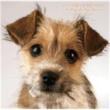 東真紀 ジョンの純な恋物語【特別完全版】~6 Songs for DOG LOVERS~