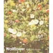 Wallflower Dreamy Days
