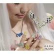 矢住夏菜 白いジャスミンの花