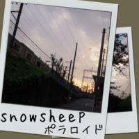 snowsheep ポラロイド