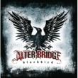 アルター・ブリッジ Blackbird