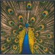 The Bluetones Expecting To Fly [Expanded Edition]