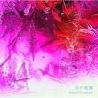 音楽:中川幸太郎 「冬の輪舞」オリジナル・サウンドトラック