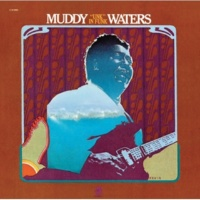 Muddy Waters Electric Man