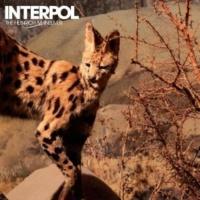 Interpol Mammoth (Instrumental)