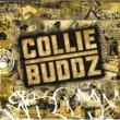 Collie Buddz ブラインド・トゥ・ユー