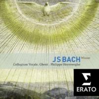 Christoph Prégardien/Orchestra of Collegium Vocale, Ghent/Philippe Herreweghe Missa in G major BWV 236/E4: Quoniam tu solus Sanctus (Tenor)