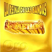 Banda Machos Güerita