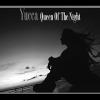 Yucca Queen Of The Night