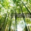 Varous Artists JAPAN ANIMESONG COLLECTION SPECIAL 「NARUTO -ナルト- 少年篇」