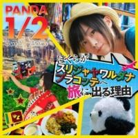 PANDA 1/2 ぼくらがスリジャヤワルダナプラコッテへ旅に出る理由 (INSTRUMENTAL)