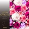 ラグジュアリー オルゴール ラグジュアリー オルゴール ジブリ セレクション Vol.1