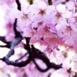 Various Artists JAPAN ANIMESONG COLLECTION VOL. 47 [アニソン ジャパン]