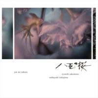坂本龍一 八重の桜 紀行 (cello & piano ver.)