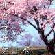 U.M.U FOR JAPAN feat.春香クリスティーン サクラサケ日本