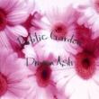 Dragon Ash Public  Garden