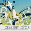 Ulisses Rocha Brazilian Birds