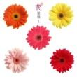 朴葵姫(パク・キュヒ) 花は咲く ギター・ソロ
