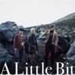 w-inds. A Little Bit(初回盤A)