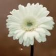 花は咲くプロジェクト 花は咲く instrumental