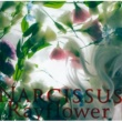 Rayflower Narcissus