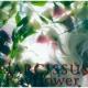 Rayflower Narcissus