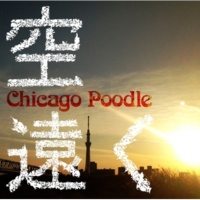 Chicago Poodle 空遠く