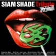 Richie Kotzen SIAM SHADEトリビュート vs オリジナル