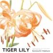 Kenmochi Hidefumi TIGER LILY