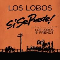 Los Lobos/Raul Brambila Mujeres Valientes