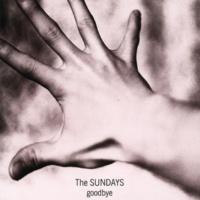 The Sundays Wild Horses