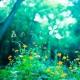 Natural Healing 森のうた
