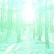 神谷 操 sacred forest