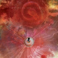 Animals as Leaders Physical Education
