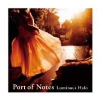 Port of Notes 夜明けのバラ