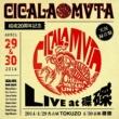 CICALA MVTA CICALA-MVTA結成20周年記念LIVE at磔磔