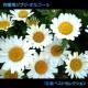 浜崎 vs 浜崎 作業用ジブリ・オルゴール 16曲ベストセレクション