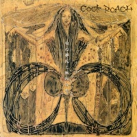 COCK ROACH 触角