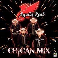 Aguila Real Pajarillo