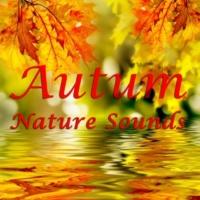 Nature Tribe Rain Song