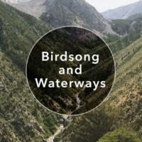 Outside Broadcast Recordings Ornithology