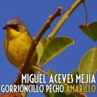 Miguel Aceves Mejia Gorrioncillo Pecho Amarillo