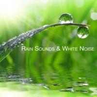 Rain Sounds & White Noise Wet Outside