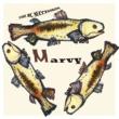 RCサクセション MARVY
