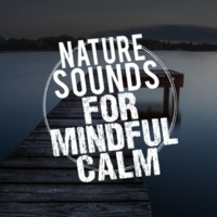 Nature Sounds for Sleep and Relaxation Birds of the Meadow
