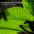 Sounds of Nature White Noise for Mindfulness Meditation and Relaxation Healing Sounds of Nature & Relaxing Piano and Guitar Music for Meditation, Yoga, Relax and Sleep