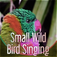 Nature Sounds Universe Small Wild Bird Singing - Effects of Birds, Forest Ambience, Morning Bird Calls for Relaxation